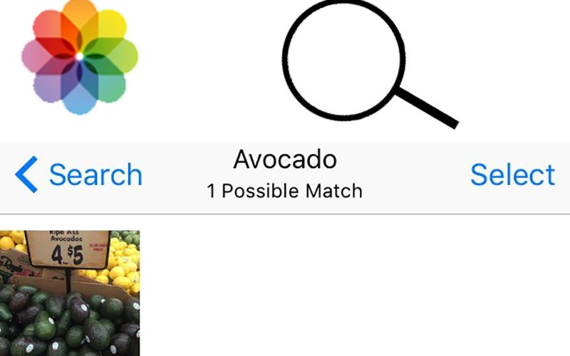 Apple Photos Search Feature