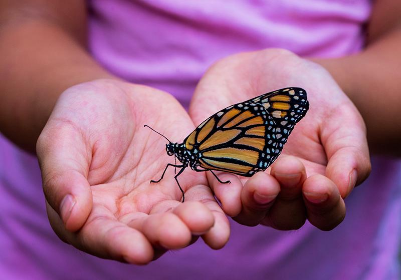 Fragile Like a Butterfly